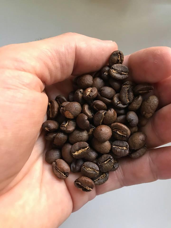 zrnka cerstvo uprazenej kavy v ruke